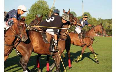a group of polo players on brown horses competing on a field