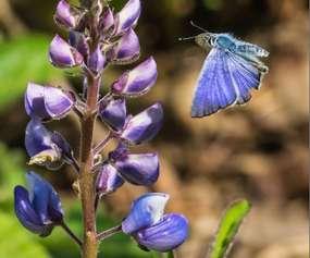 butterfly by flower