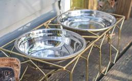 two raised dog bowls
