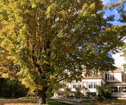 bed and breakfast in the fall