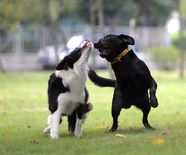 two puppies playing in the park
