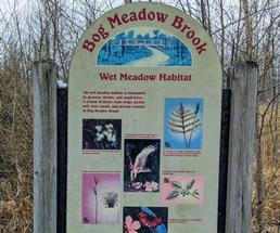 Bog Meadow sign