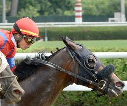 closeup of a jockey and horse