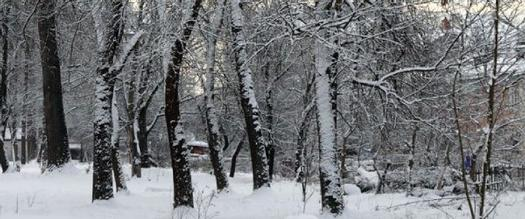 group of snow covered trees
