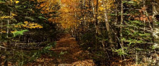 trail covered in orange leaves
