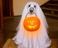 a dog holding a pumpkin pale in his mouth