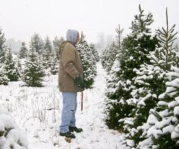 man about to cut down a christmas tree