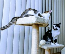two cats on a cat tree
