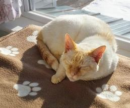 cat on brown blanket with paw prints sleeping