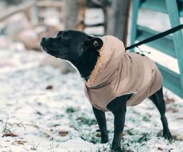 dog in pet winter safety coat