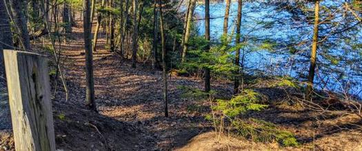 trail with a lake nearby