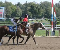 horse heading to starting gate