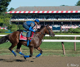 American Pharoah warming up at Saratoga