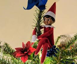 Elf on the Shelf on Christmas tree looking happy