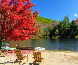 red foliage in a tree by Adirondack chairs by lake