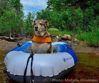 dog in a raft