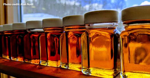 rows of syrup in a window