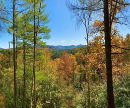 Mountains in the distance with colorful fall trees in the foreground