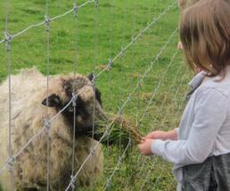 kid feeding a sheep