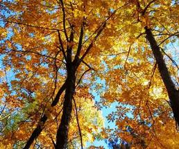 Colorful fall foliage against a crystal clear blue sky