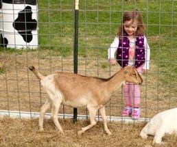 girl at a petting zoo