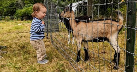 goat and toddler