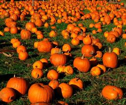 a bunch of pumpkins on the ground