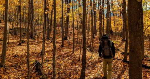 hiker in the woods in the fall