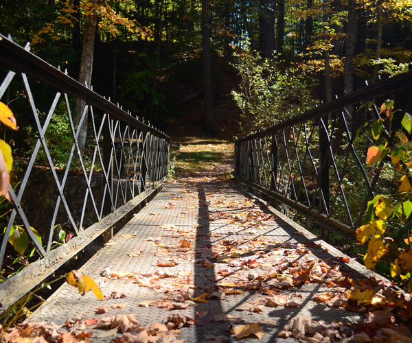bridge with fall leaves on it