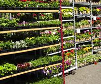 flowers at a garden center