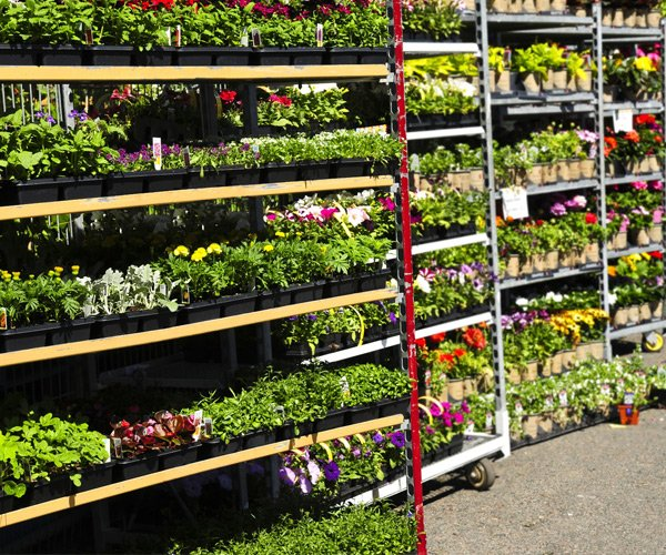 racks of flowers at a garden center