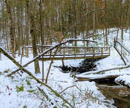 winter scene in woods with bridge