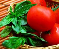 basil and tomatoes in a basket