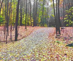path in woods in fall