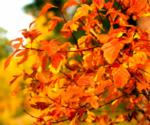 orange leaves on tree