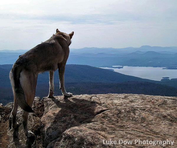 dog on top of mountain