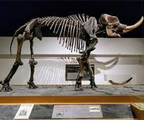 skeleton of Cohoes mastodon