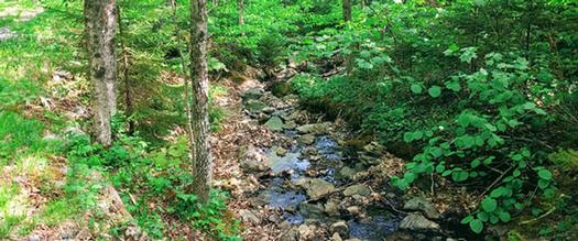 stream in the woods next to a trail