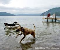 dogs in lake george