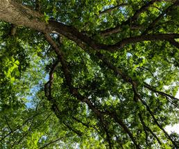view looking up at a tree