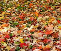 colored leaves on the ground