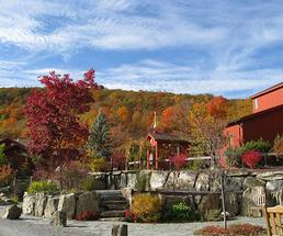 buildings near fall foliage