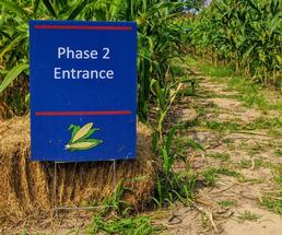 phase 2 sign in front of corn maze