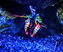 a colorful crab