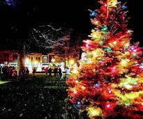 holiday tree at night