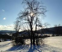 a landscape in winter