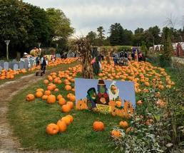pumpkins with Sunnyside Gardens sign