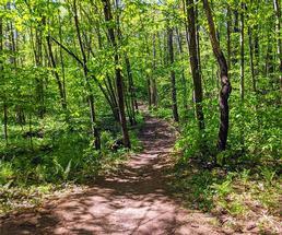 trail at wilton wildlife preserve