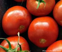 close up of vine tomatoes