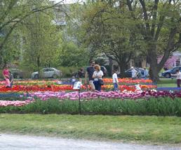 people at albany tulip festival